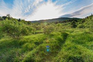 Mountain, green road in a field