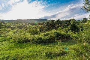 Sunny field sunset green landscape