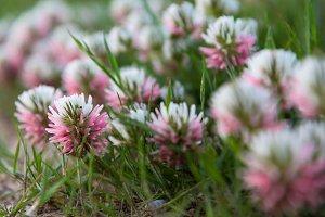 Blooming pink flower closeup