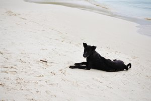 A black dog on white beach