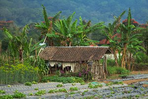 House of a poor farmer, Bali, Asia