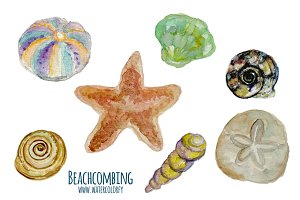 Watercolor Sea Shells