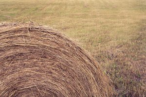 Round Haybale in Field