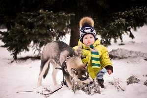 A little boy walks and plays with a husky puppy. The concept of friendship and care of human, child and animal dogs.