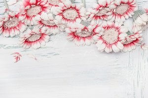 Daisies on white shabby chic