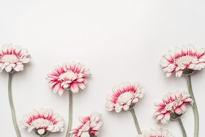 Daisies flowers on white desktop