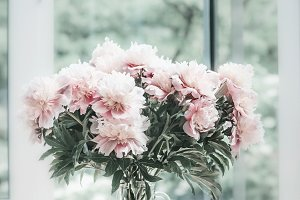 Pastel pink peonies in glass vase
