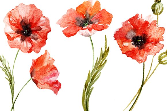 Watercolor poppy flower set graphic patterns creative market mightylinksfo