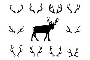 Deer s head and antlers set
