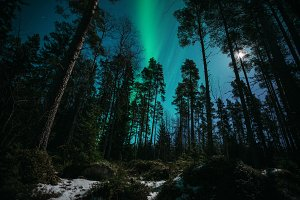 Northern lights in magic forest