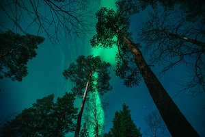 Northern Lights above Forest