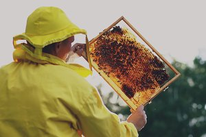 Beekeeper man checking wooden frame before harvesting honey in apiary on sunny day