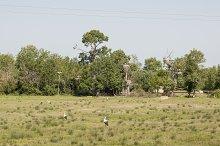 storks in their territory