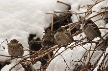 four birds in the snow