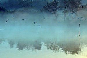 Misty Blue Water Birds Landscape
