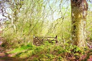 Photo Woodland