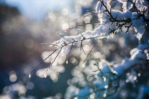 winter bokeh snowy branch