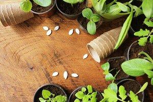 Gardening concept background