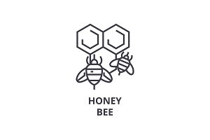 honey bee line icon, outline sign, linear symbol, vector, flat illustration