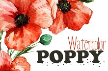 Watercolor poppy flower set