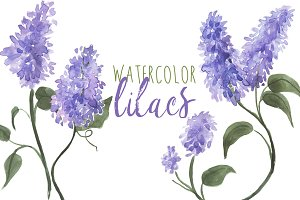 Watercolor Lilacs