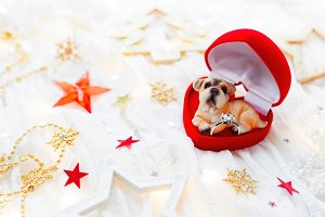 Christmas and New Year 2018 dog gift