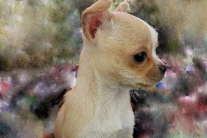 chihuahua puppy on impressionistic