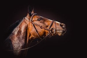 Horse over a dark background