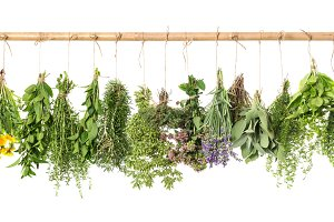 Fresh herbs. Food ingredients