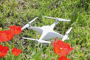 Quadrocopter DJI Phantom 4 is located on a meadow with red tulip flowers.