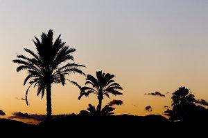 Sunset in Elche