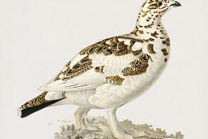 Illustration of bird (PSD)