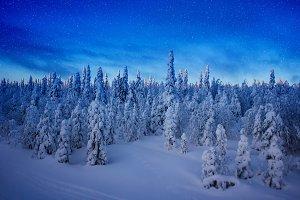 Finnish woods under the stars landscape