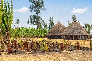 Traditional village houses in Ethiopia