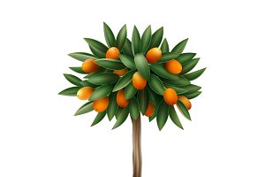 Kumquat tree in pot