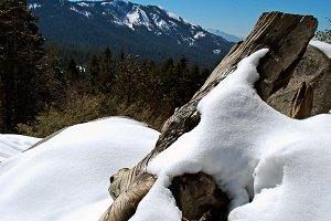 Snowy Log