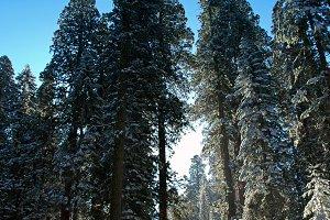 Road To Winter Wonderland