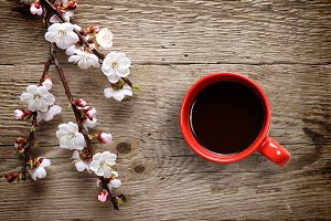 Apricot flowers and coffee cup