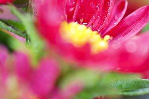 Bouquet of fresh wild red flowers