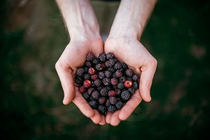 Raspberry in the hands on the grass