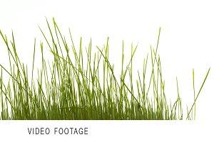 green grass 4