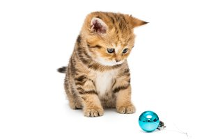 Small kitten and Christmas toy
