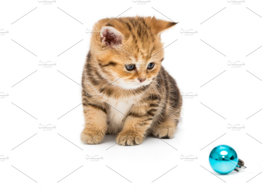Small kitten and Christmas toy ~ Animal Photos ~ Creative Market