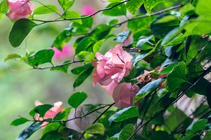 Tropical flowers in nature background. Green and pink natural background. Bali island.