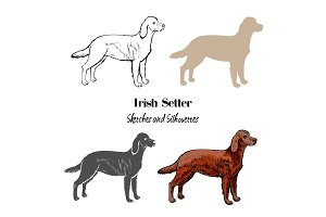 Irish setter dogs sketches