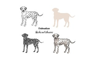 Hand drawn Dalmatian sketches