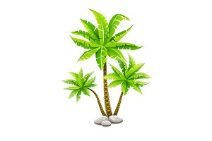 Tropical coconut palm trees with green