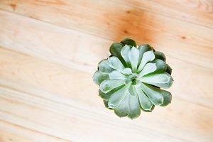 Succulent Stock Photo