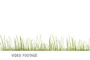 green grass 3