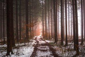 Murky autumn forest